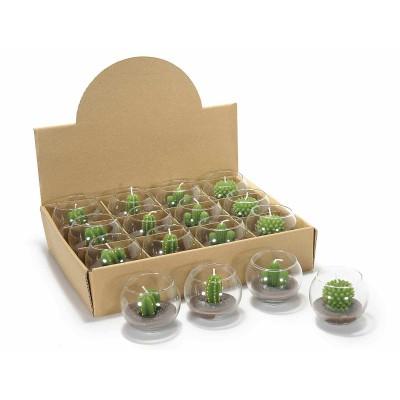 Set 12 candele a forma di pianta grassa in sfera di vetro