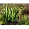 Set 2 composizioni di piante grasse artificiali in vasi di resina