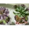 Set 2 piante grasse artificiali decorative in vasi in rattan
