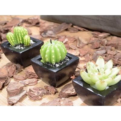 Set 4 candele a forma di vasetto con pianta grassa